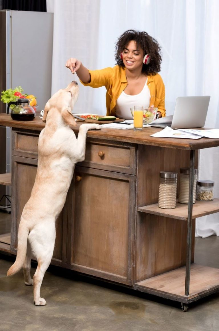 woman at desk feeding dog - free courses for moms cropped resized
